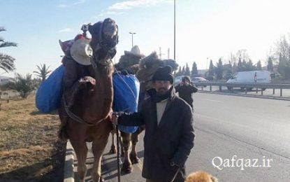 حضور گردشگر ایرانی با شتر در شهر گنجه جمهوری آذربایجان