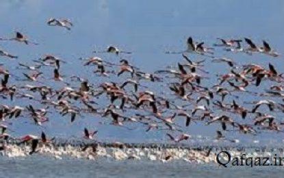 تکذیب مرگ پرندگان مهاجر در جمهوری آذربایجان