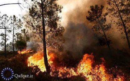 آتش سوزی در منطقه جنگلی جمهوری آذربایجان در نزدیکی مرز ایران